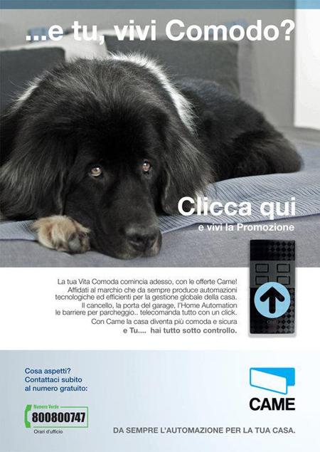 Web mail  Campagna online di newsletter realizzata da agenzia web di Treviso